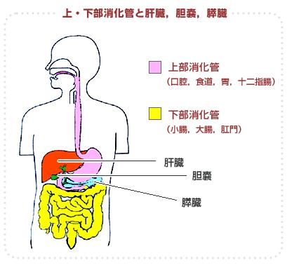 消化器専門外来 札幌同交会病院 ...
